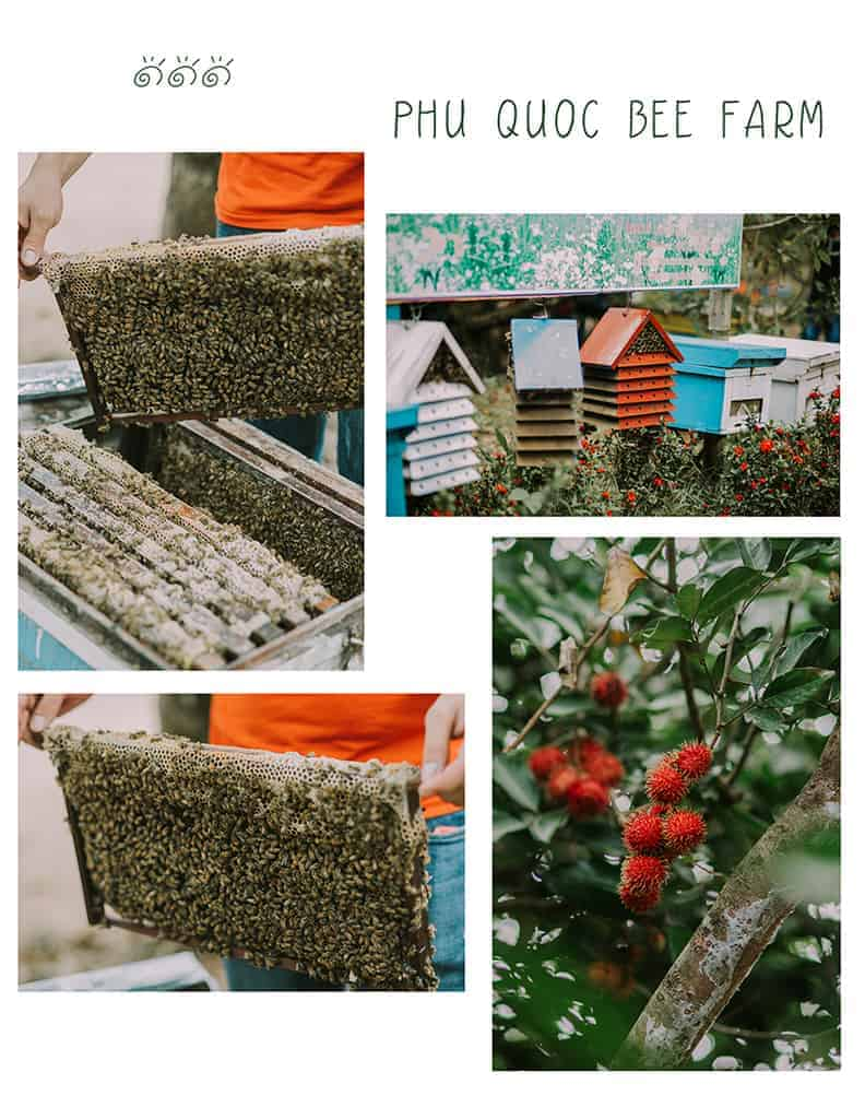 đi phú quốc tự túc - trại ong