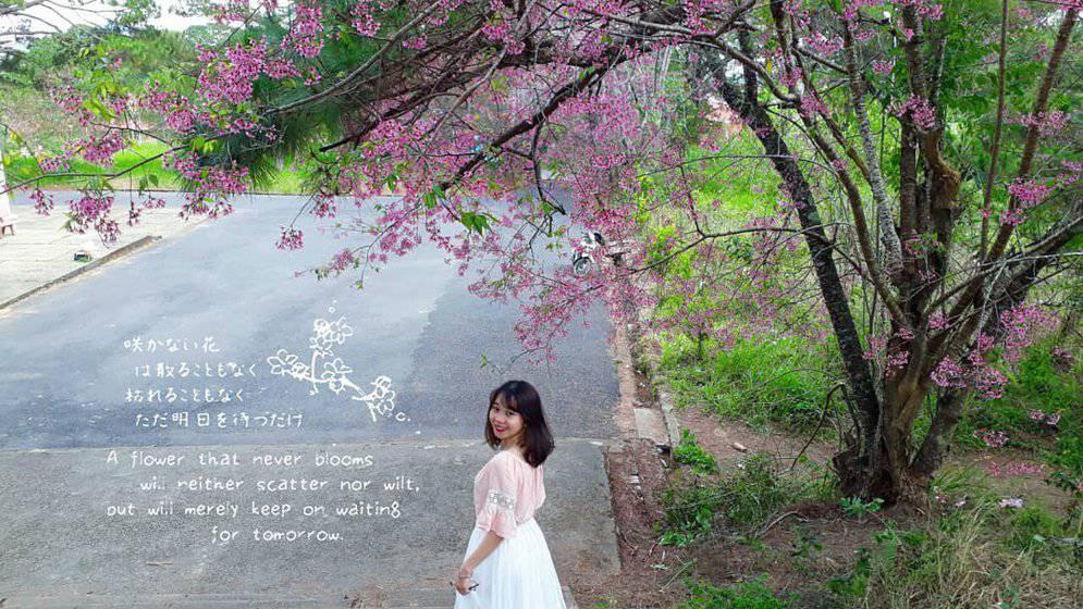 lo-dien-ngoi-truong-dep-nhu-phim-han-o-da-lat-dang-dan-dau-hot-trend-song-ao-28
