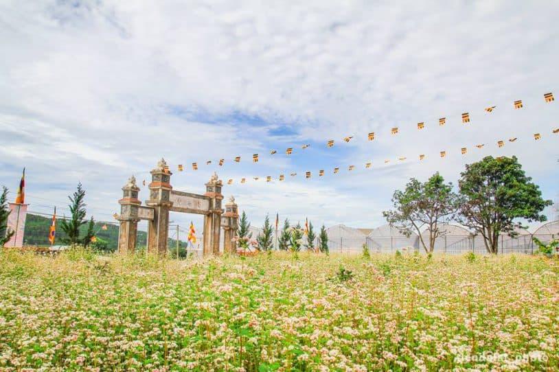 Image result for Vườn hoa tam giác mạch ở Đà Lạt chùa Vạn Đức