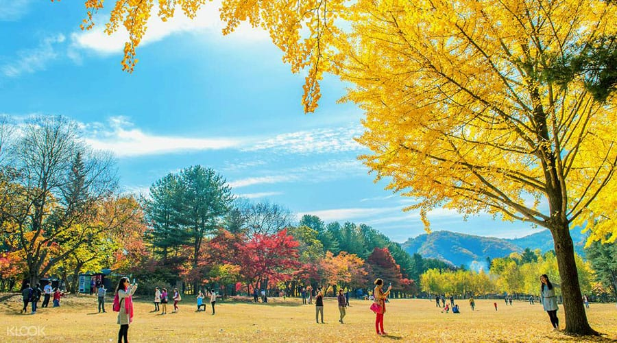 nami-island-autumn3