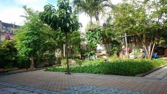 Là một trong những homstay Lý Sơn có sân vườn xanh mát (Ảnh ST)