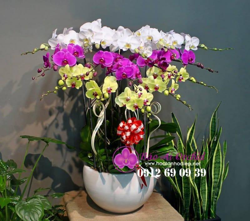 Bảo Ái Orchid's