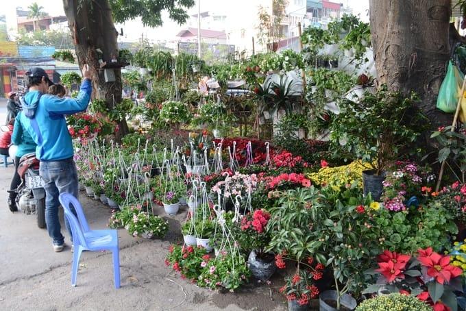 Hoa Hoàng Hoa Thám