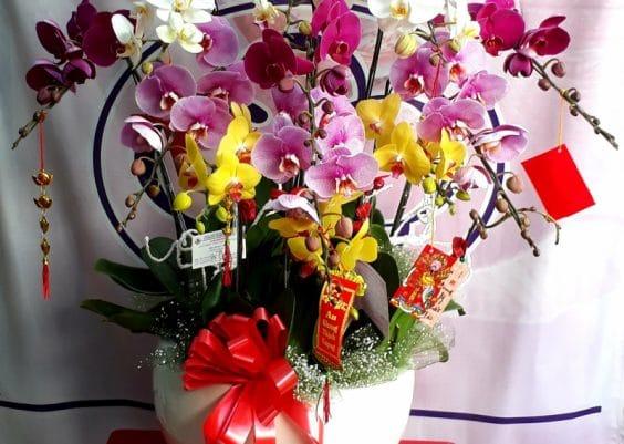 Hoa lan Sài Gòn