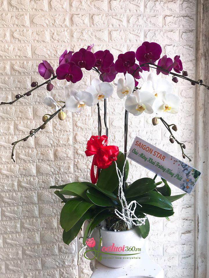 Hoa Tươi 360 - Shop hoa lan hồ điệp Hà Nội