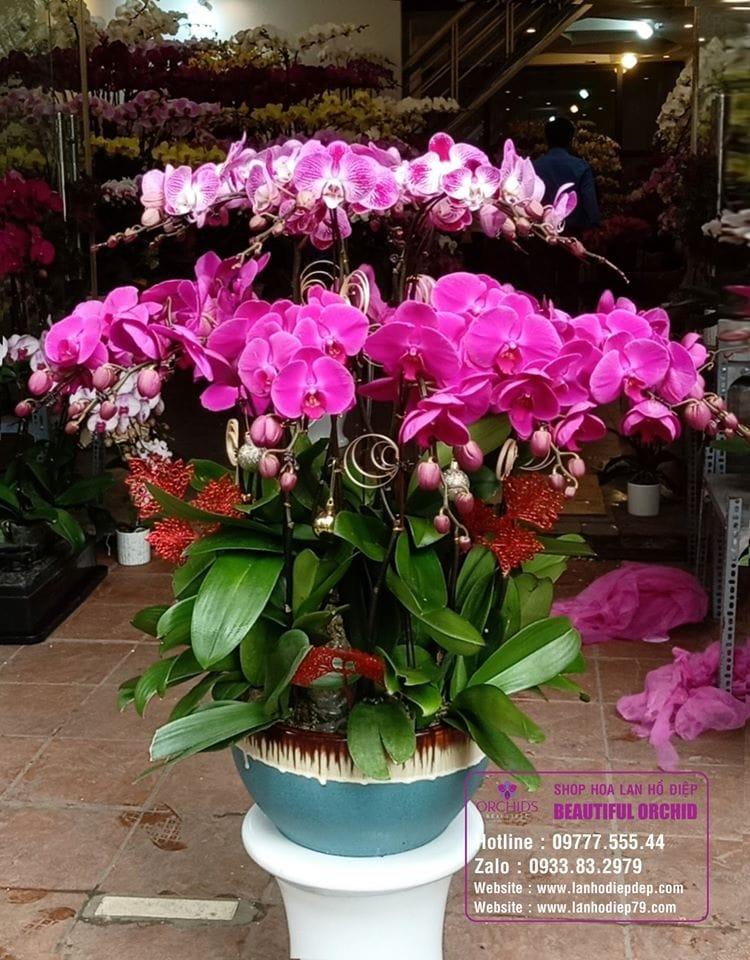 Shop Lan Hồ Điệp Hà Nội Orchids 79
