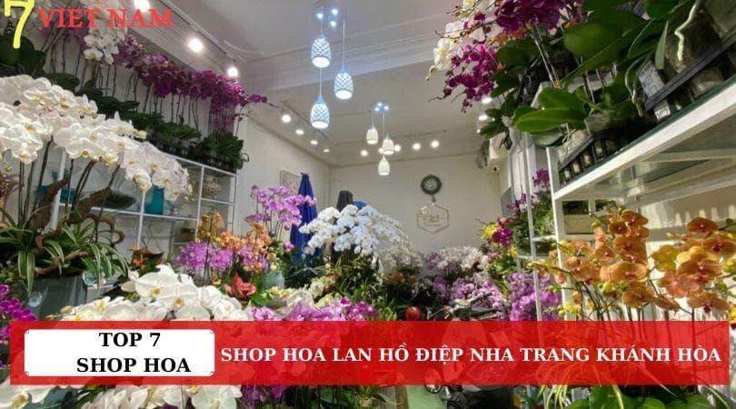 Top 7 Shop Hoa Lan Hồ Điệp Nha Trang Khánh Hòa