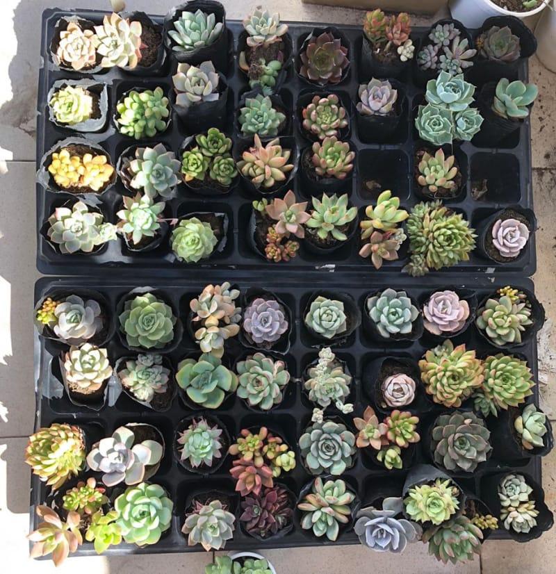 Viet Craft Garden